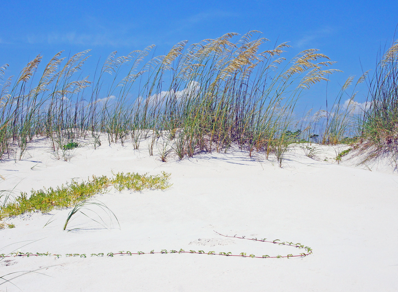 St. George Island State Park<br /> <br /> The eastern end consists of miles of undeveloped shoreline protected by St. George Island State Park.
