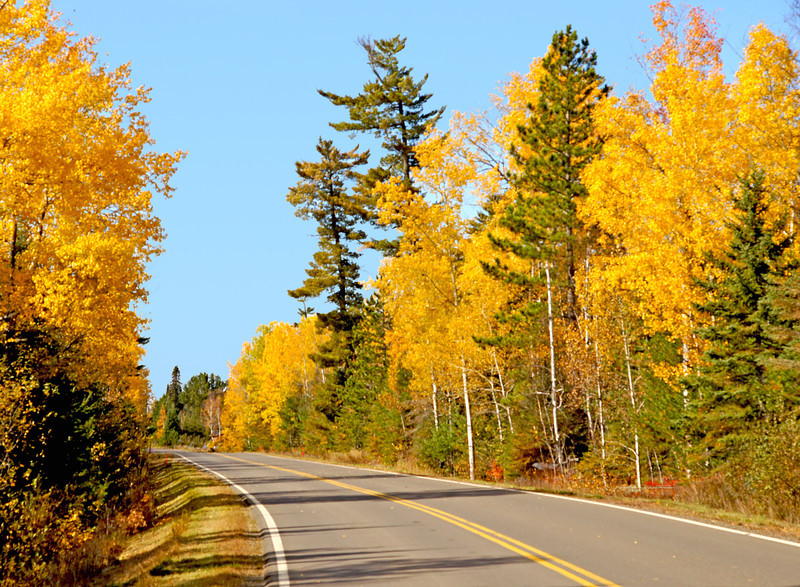 Gunflint Trail Aspens<br /> <br /> The next day we drove up the Gunflint Trail to see the golden aspen that line the sides of the road. The aspen had exceptional color this year.