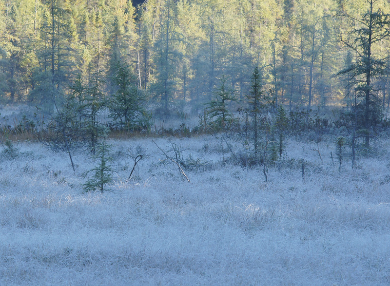 Frost<br /> <br /> Friday morning was our first frost of the season. With the colder temperatures the moose begin to get more active. I went into the back country with a friend of mine to try and call a bull moose.  We were on the road by 5:30 AM. It was the ideal morning. We stopped at a large beaver pond and called. With no wind and the cool temperature the sound of my moose calling traveled a long distance. We had no luck so we moved on.