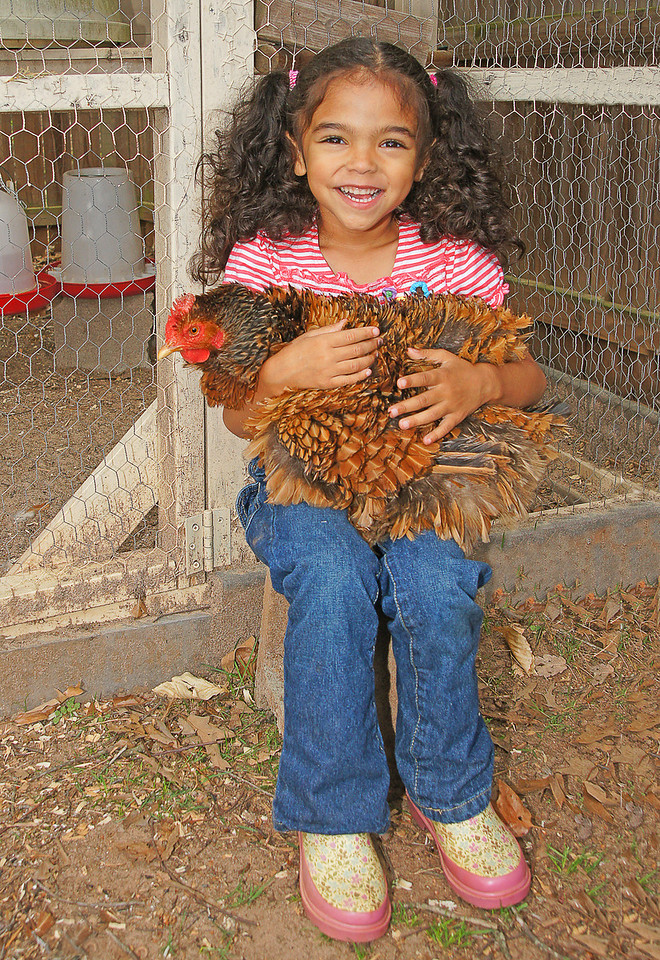Free Range Chickens 002<br /> <br /> This is Georgette, her favorite.