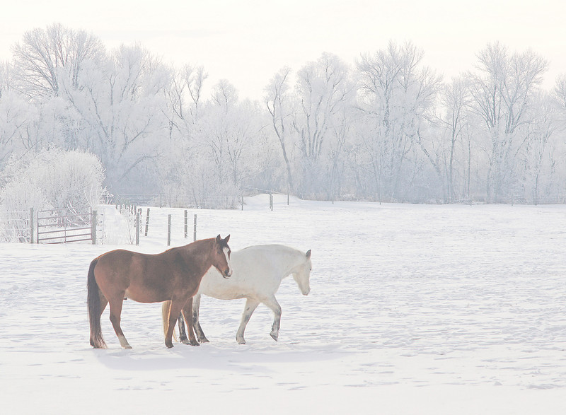 Frosty Morning 002<br /> <br /> A couple of turns later and I came across these two horses enjoying the outdoors.