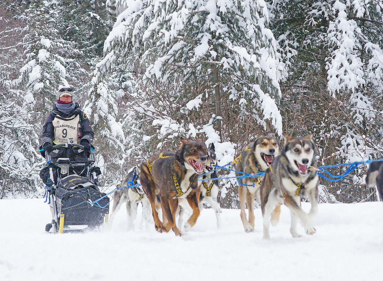 John Beargrease Sled Dog Race 002<br /> <br /> Today they made it to the Sawbill checkpoint.