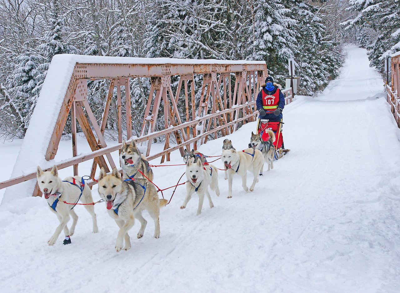 John Beargrease Sled Dog Race 005