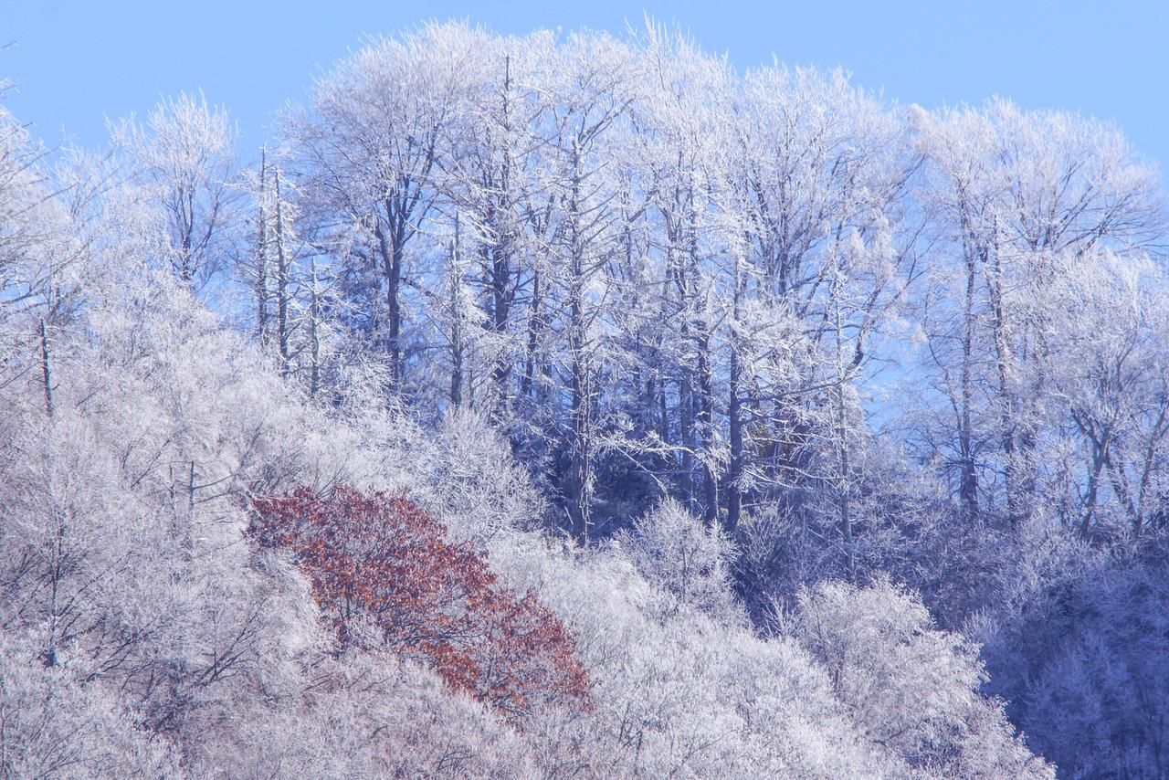 Smoky Mountains 003