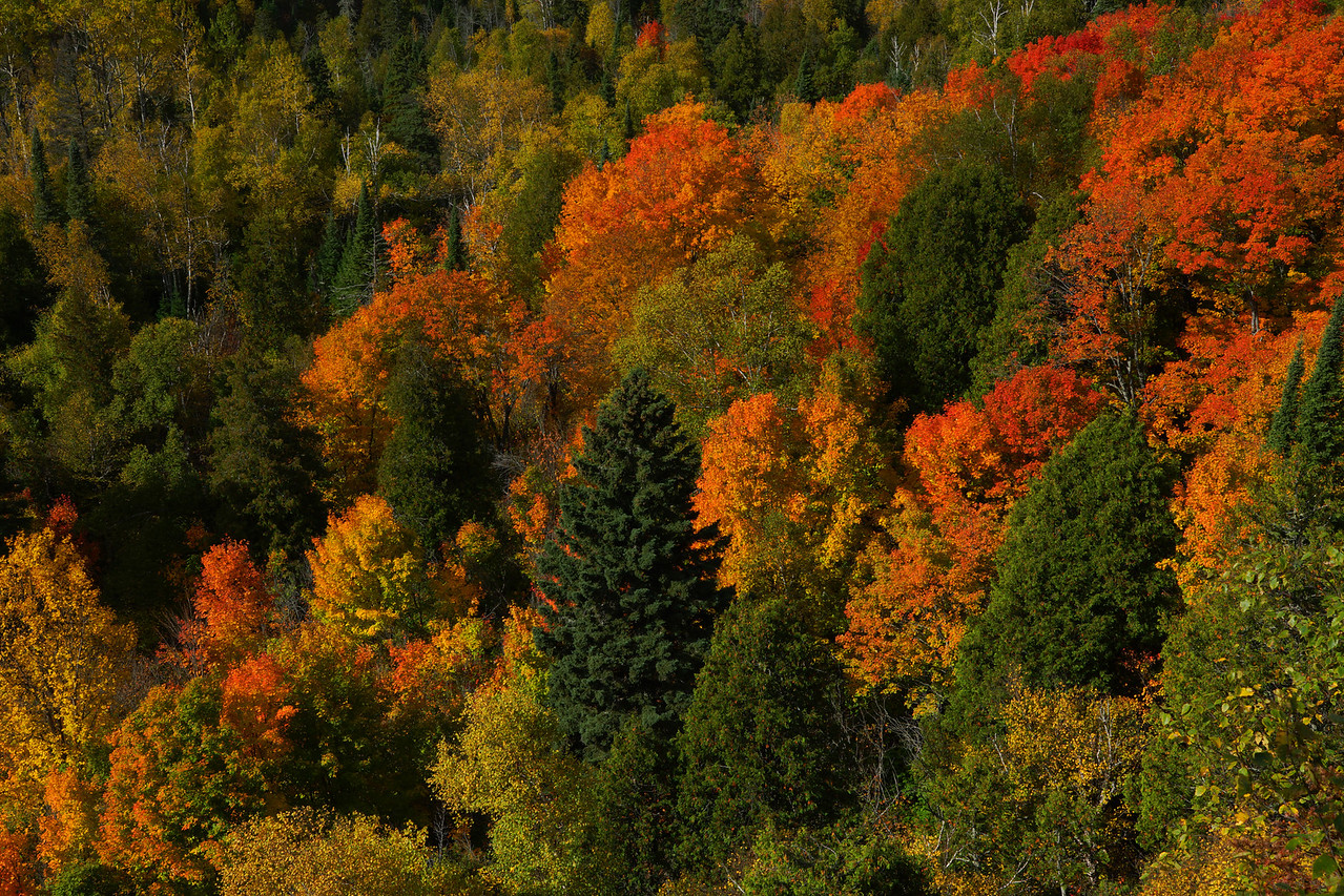 Oberg Mountain 002<br /> <br /> The reds and oranges of the maples just below the cliff were still holding their color.