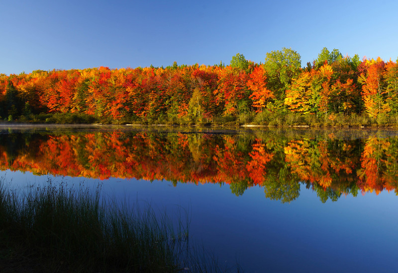 Maple Reflections 002
