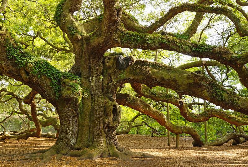Angel Oak 002