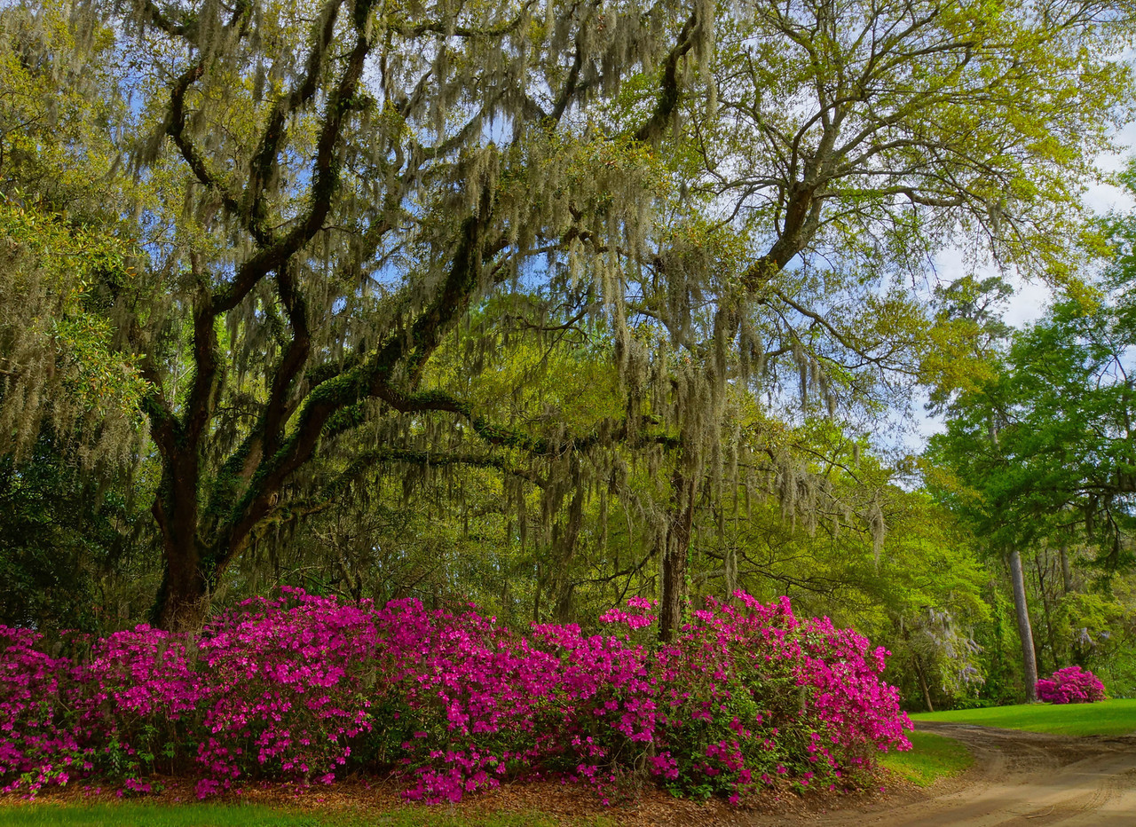 Boone Hall Plantation 002