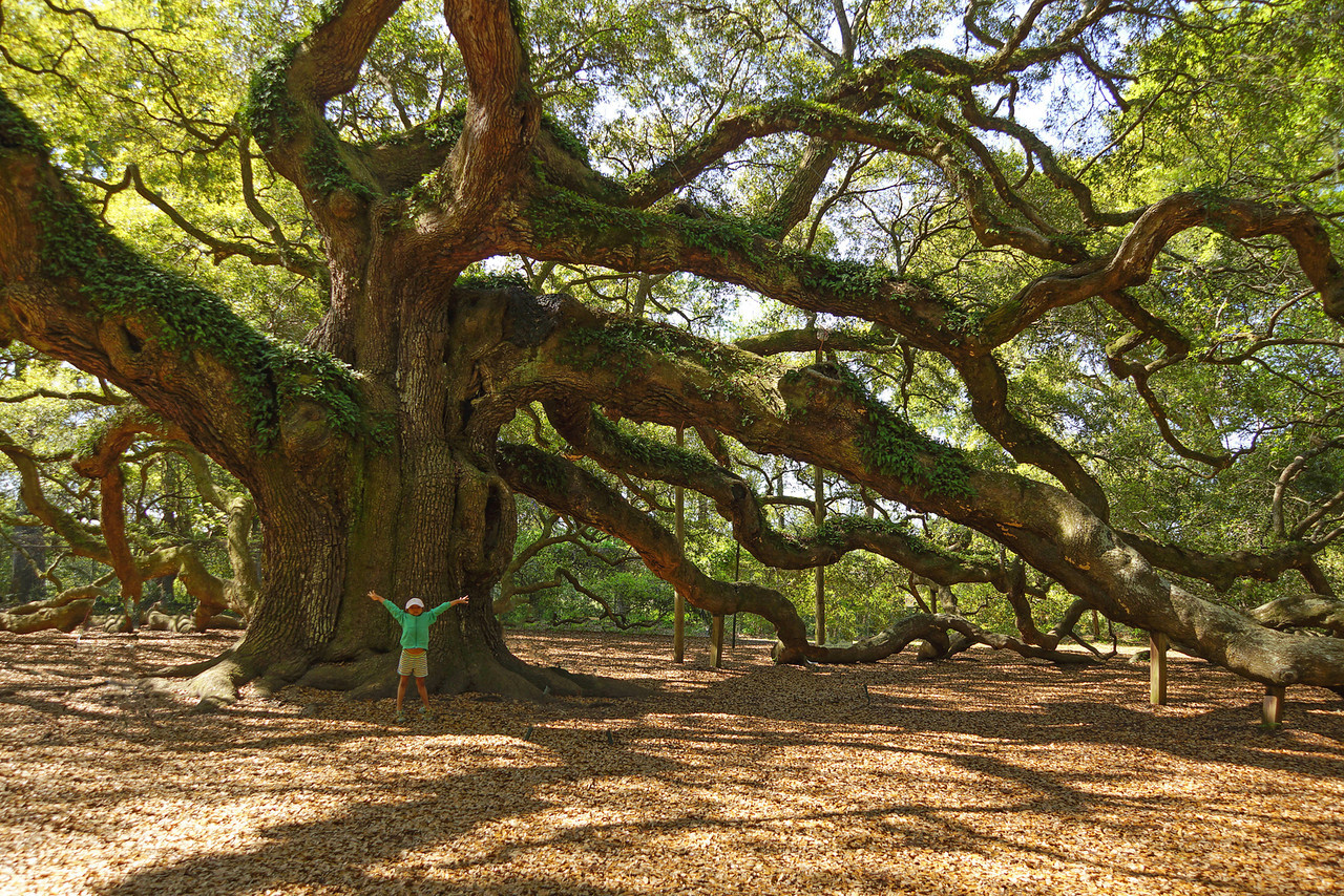 Angel Oak 003
