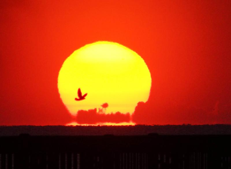 Folly Beach Sunrise 002