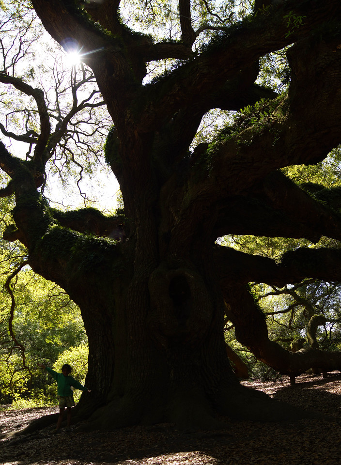 Angel Oak 004