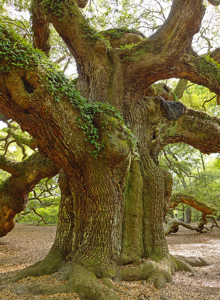 Angel Oak 001