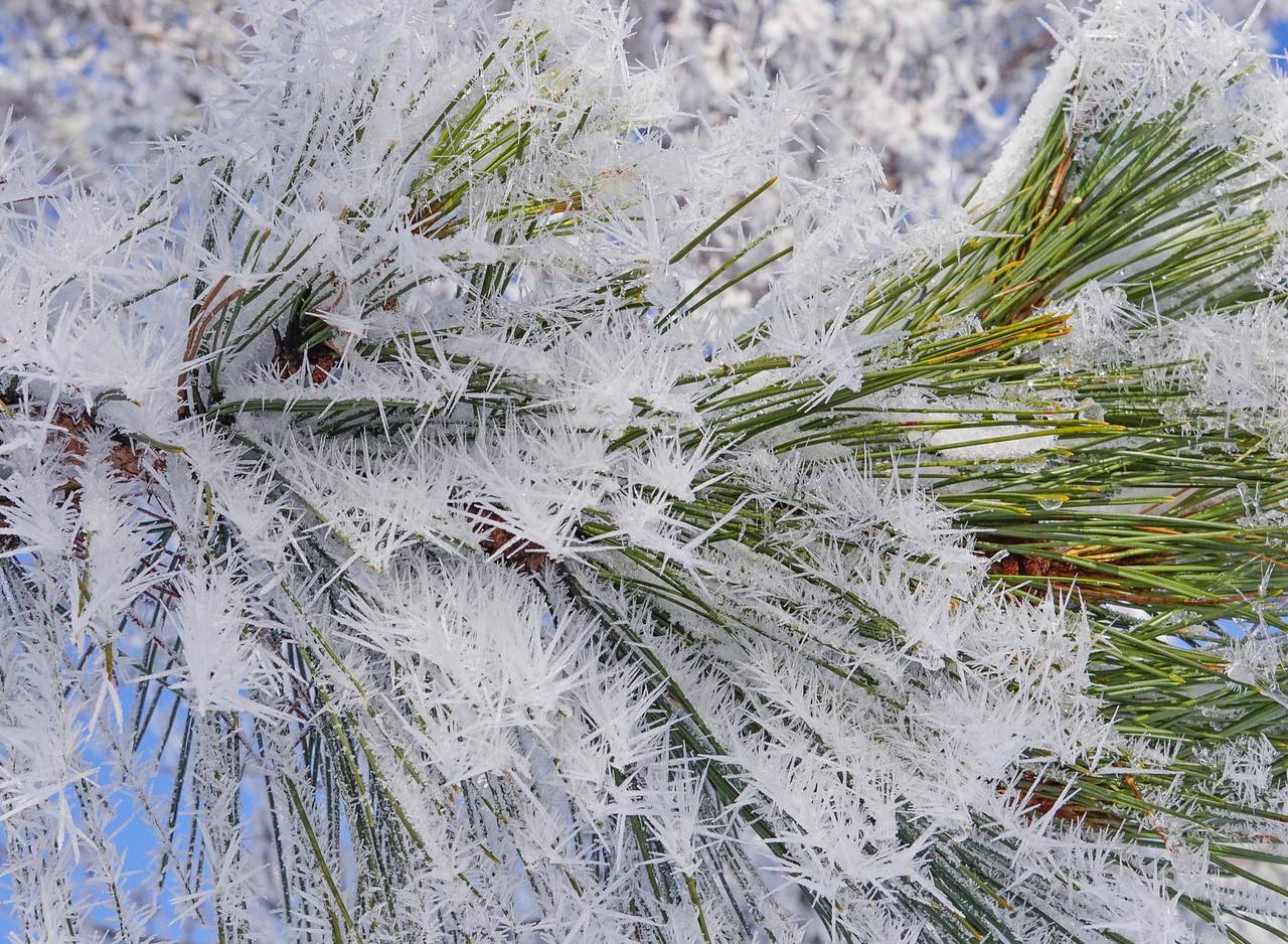 Hoar Frost 005