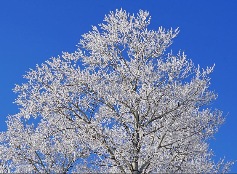 Hoar Frost 002