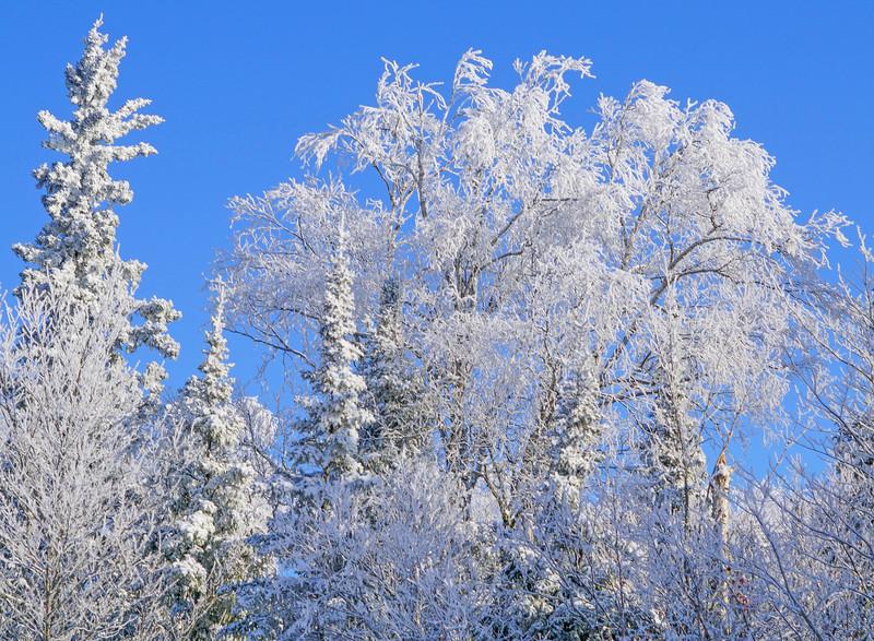 Hoar Frost 001