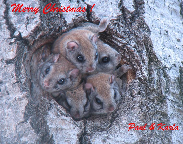 Christmas Flying Squirrels