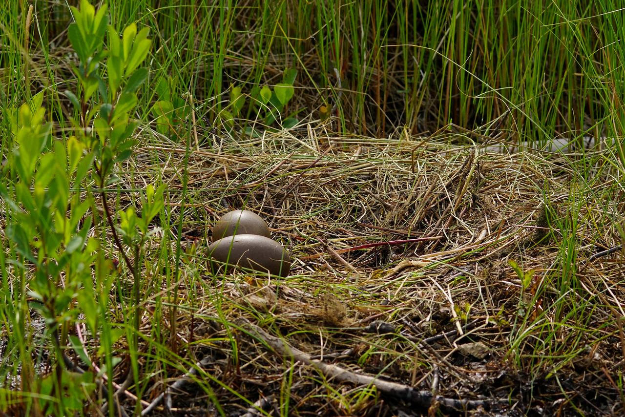 Loon Nest 003
