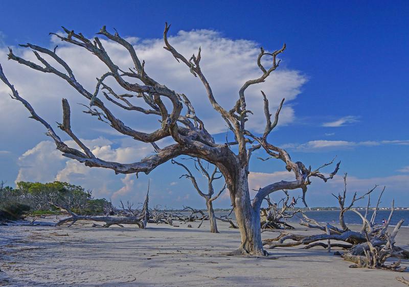 Jekyll Island 009