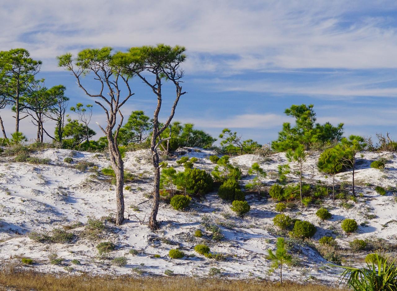 St George Island State Park 002