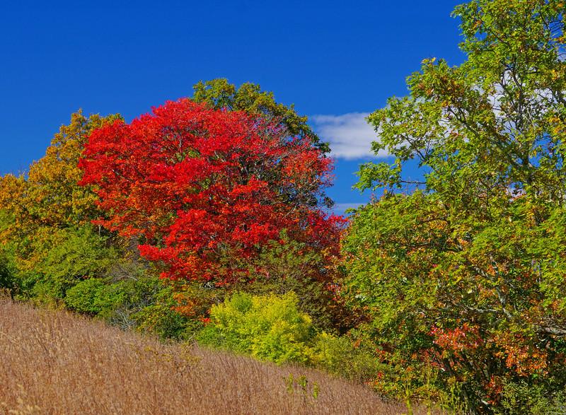 Blue Ridge Parkway 016