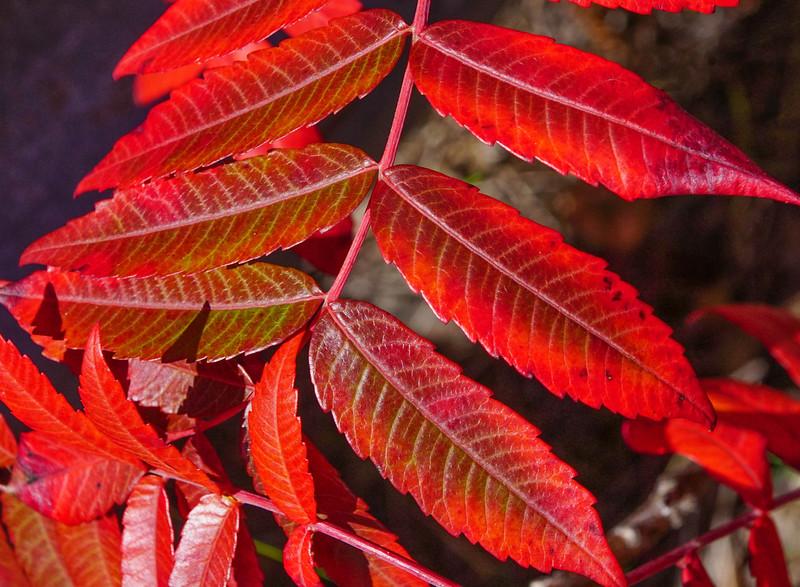 Fall Colors 008