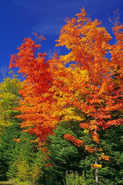 Fall Colors 006