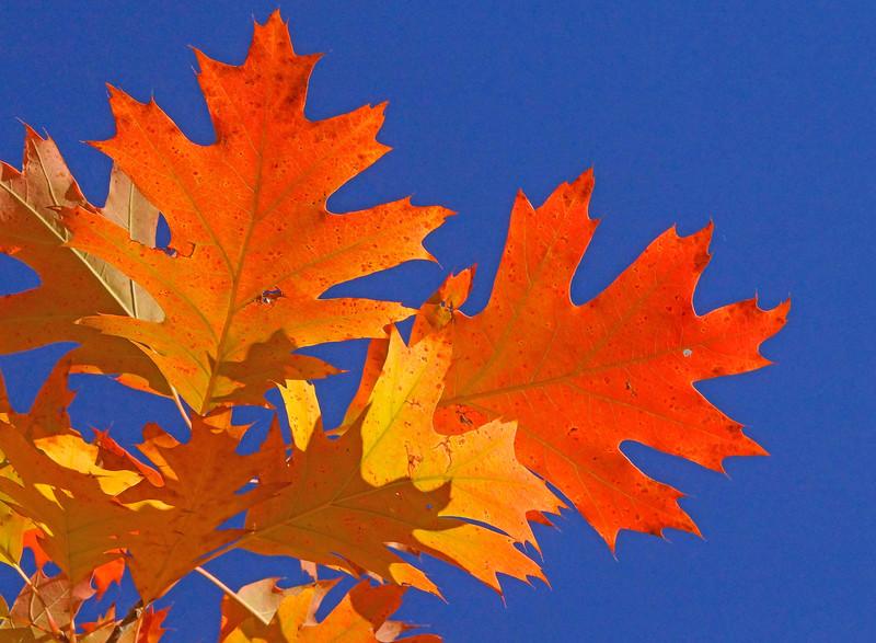 Fall Colors 010