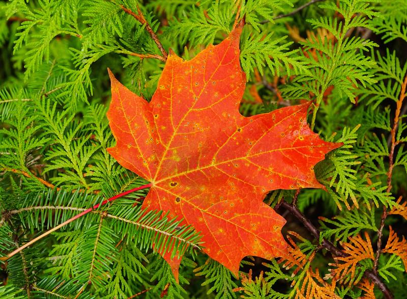Fall Colors 009