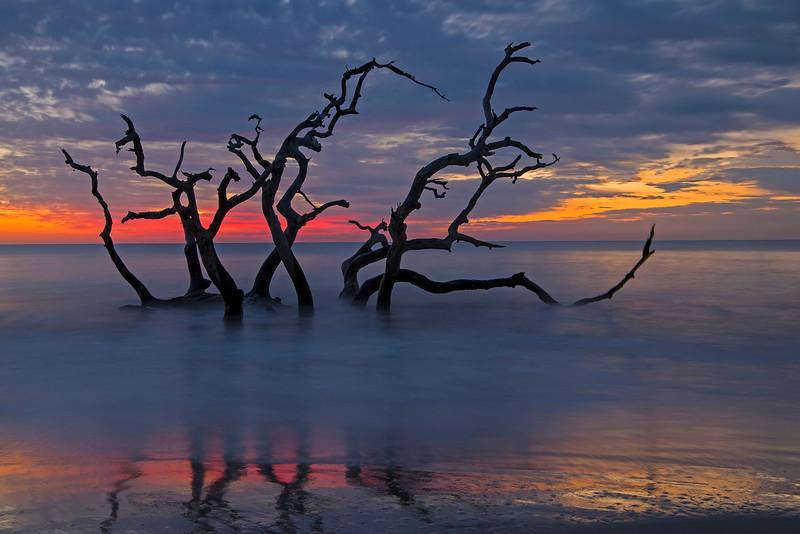 Driftwood Beach 007