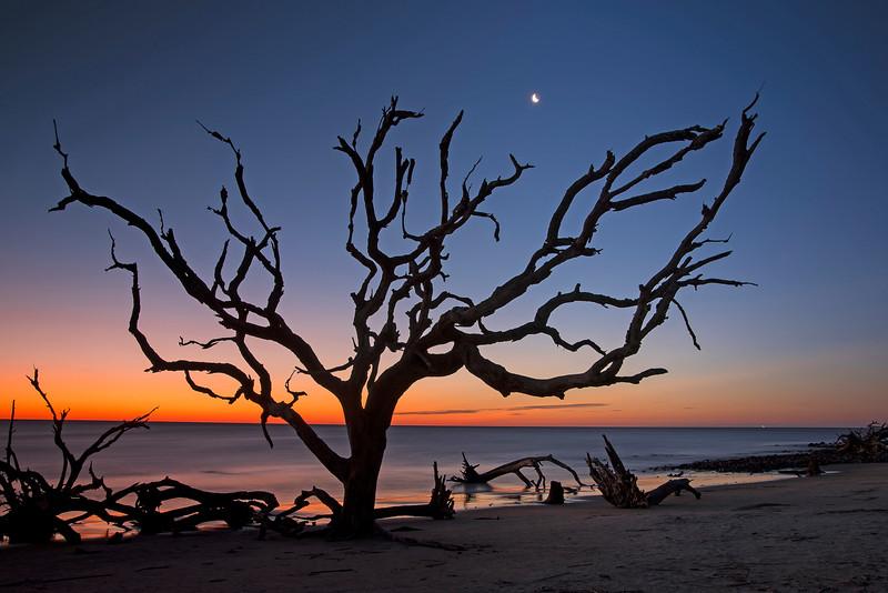 Driftwood Beach 001