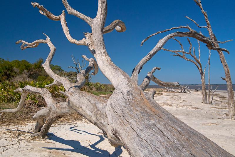 Driftwood Beach 003
