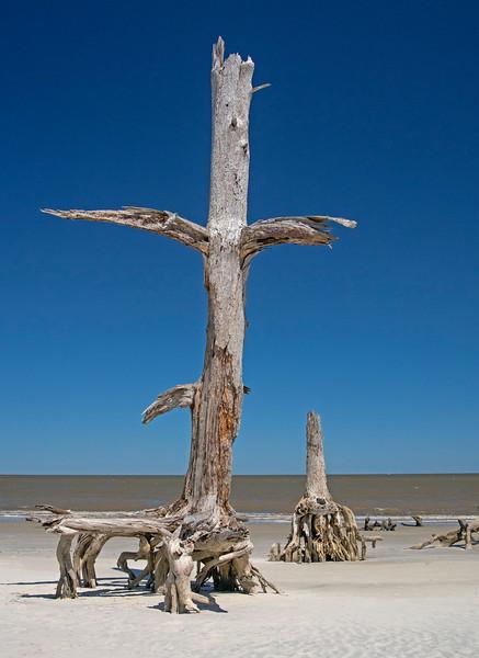 Driftwood Beach 004