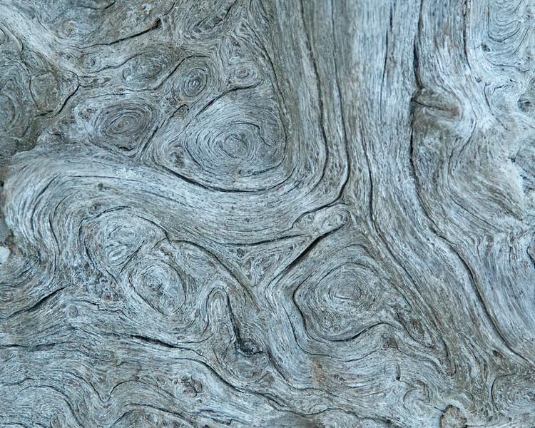 Driftwood Beach 006