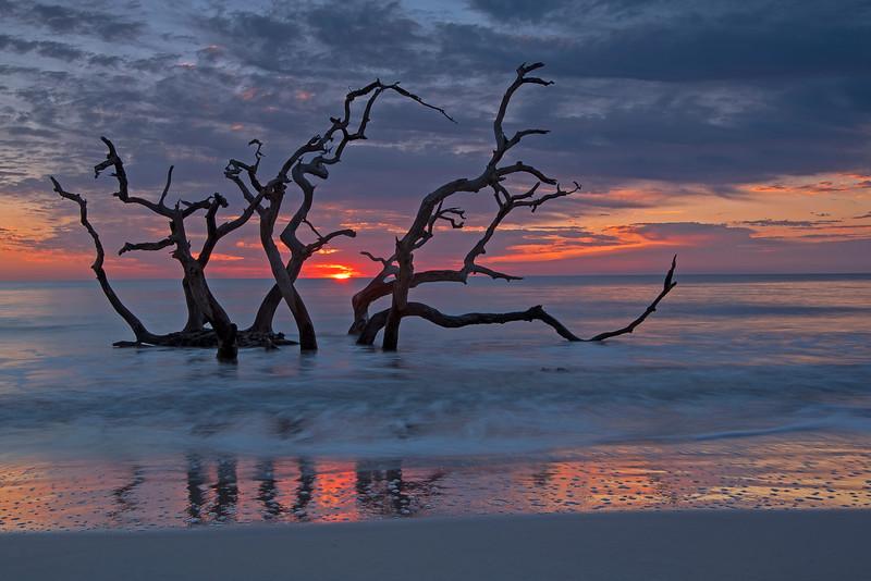 Driftwood Beach 008
