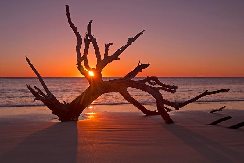 Driftwood Beach 002