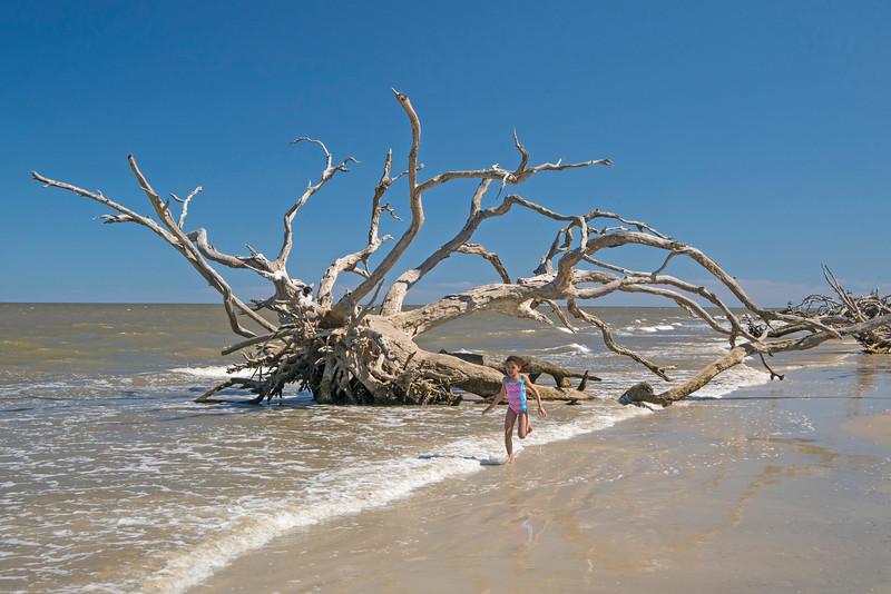 Driftwood Beach 005
