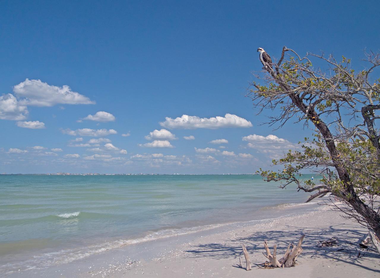 Sanibel Island 002