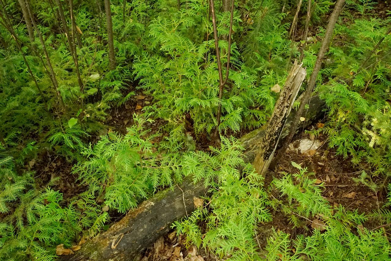 Boundary Waters Canoe Area Wilderness 006