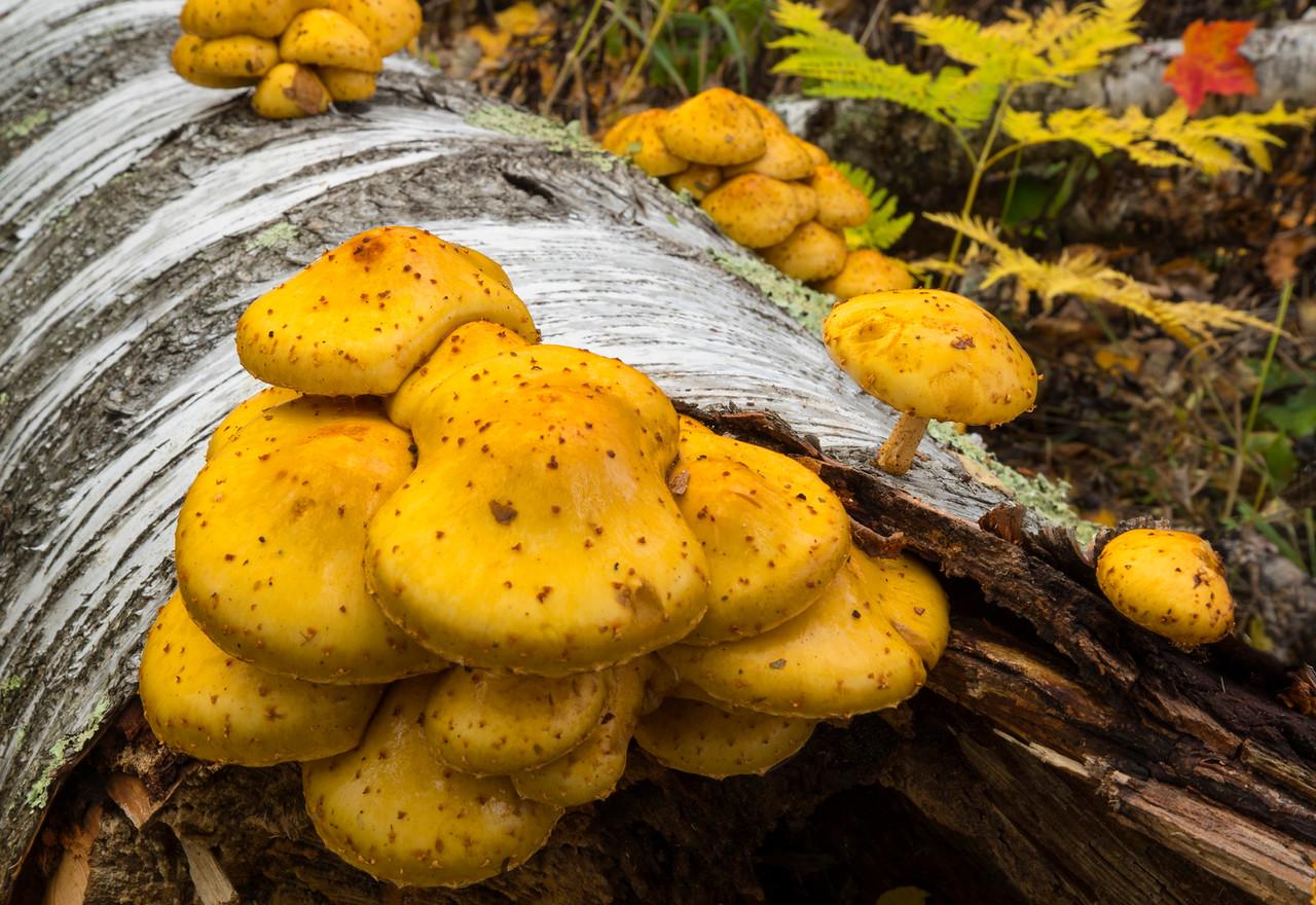 Mushrooms 001