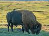 Theodore Roosevelt National Park 009