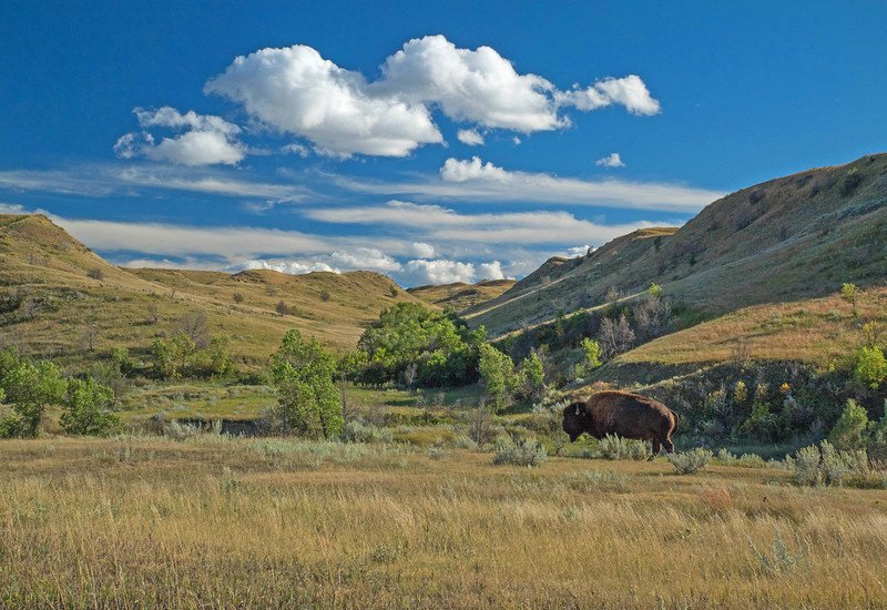Theodore Roosevelt National Park 002