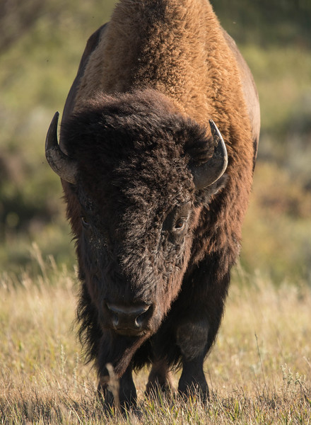 Theodore Roosevelt National Park 006