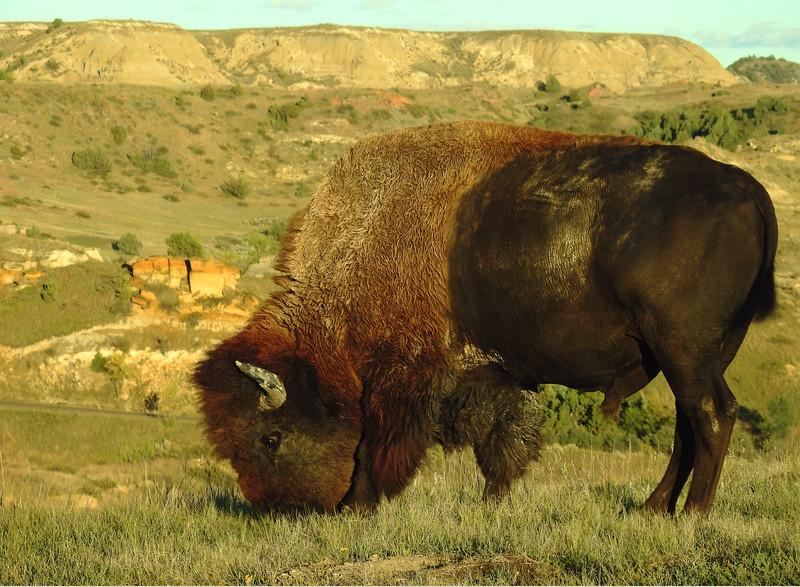 Theodore Roosevelt National Park 003