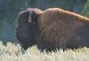 Theodore Roosevelt National Park 005