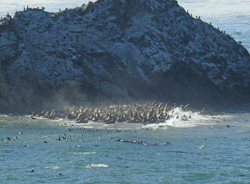 Shell Island Sea Lions 001