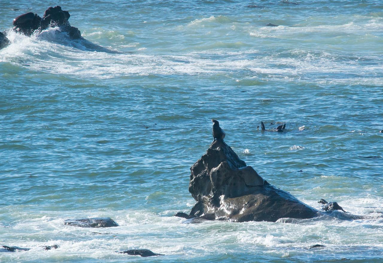 Shell Island Sea Lions 002