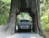 Drive Thru Redwood