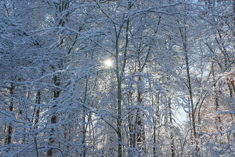 Georgia Snow 006