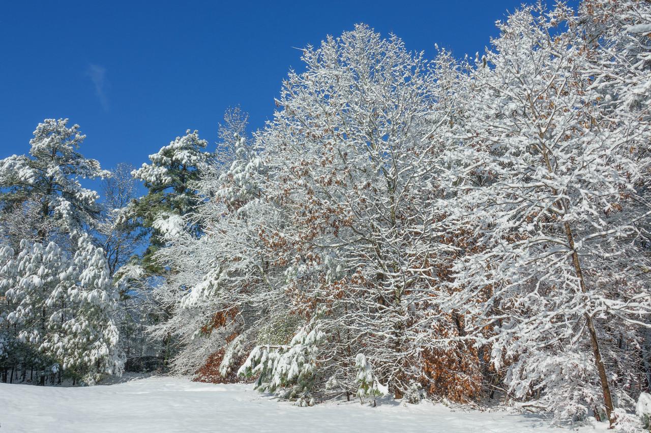 Georgia Snow 005
