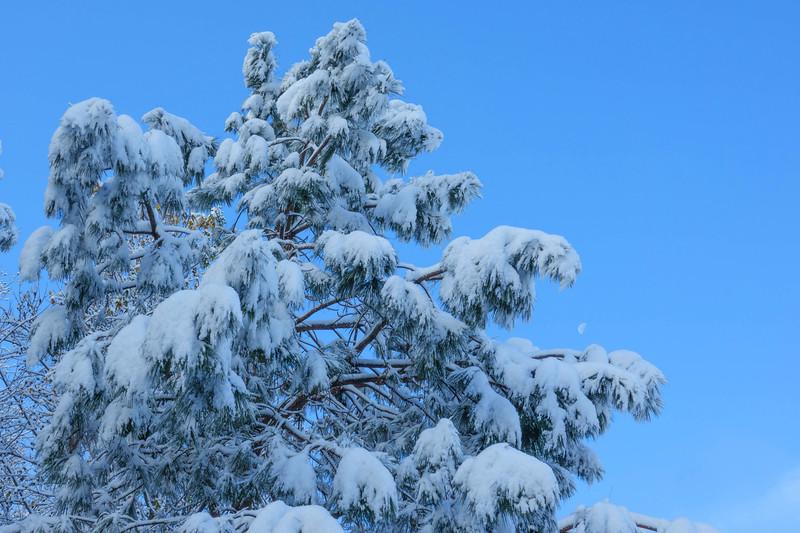 Georgia Snow 002